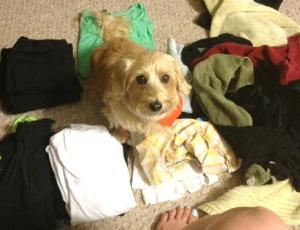 champ_laundry
